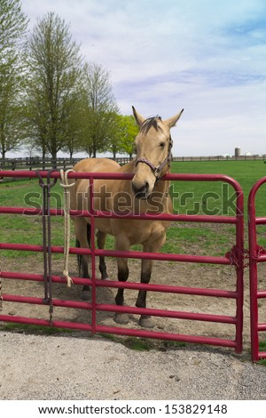 young buff horse behind fence