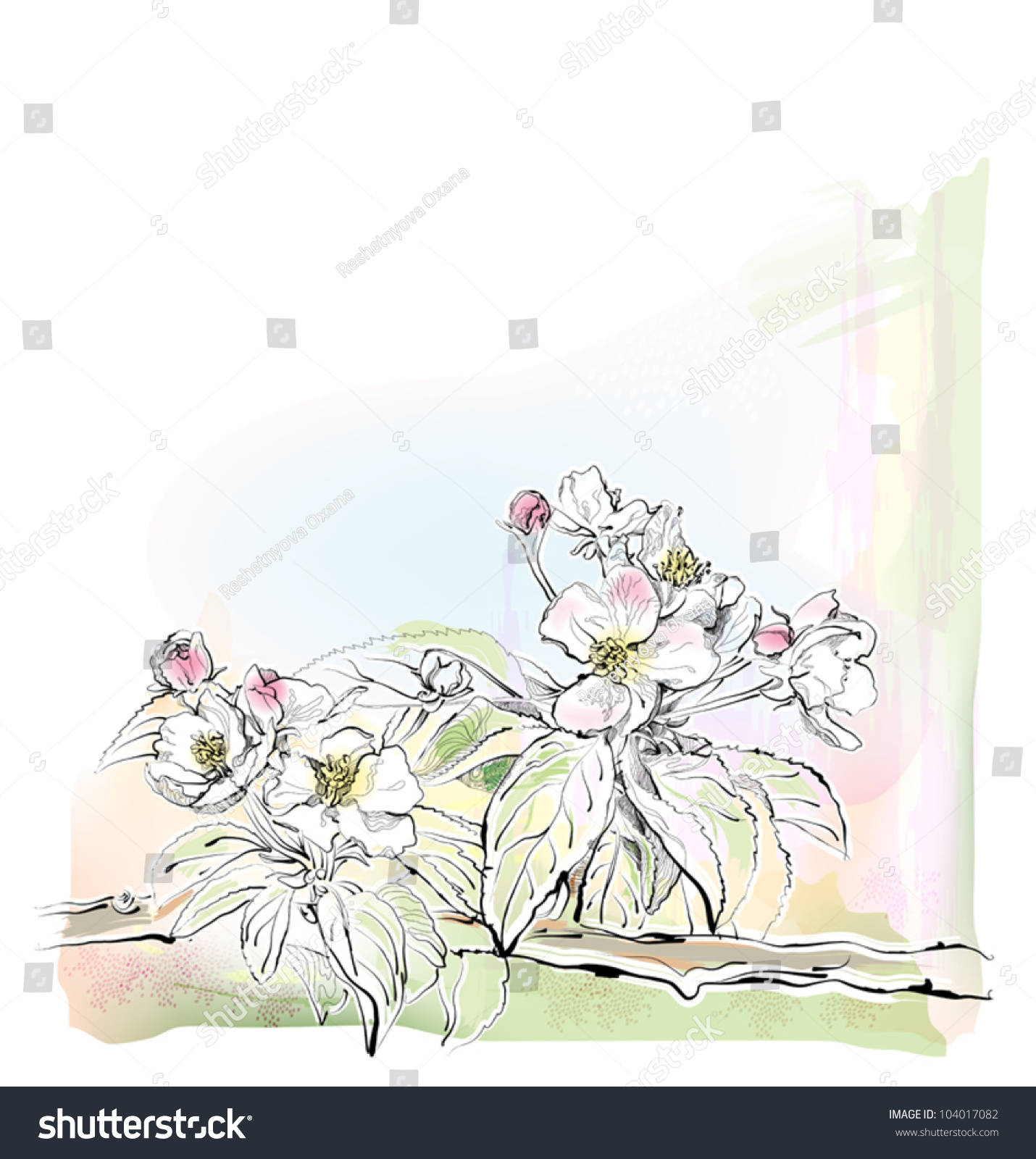 素描的苹果树开花了-自然