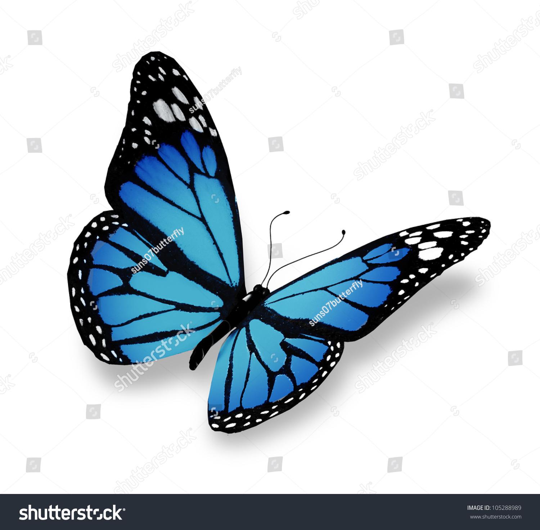 蓝色的蝴蝶,孤立在白色背景-自然,交通运输-海洛创意