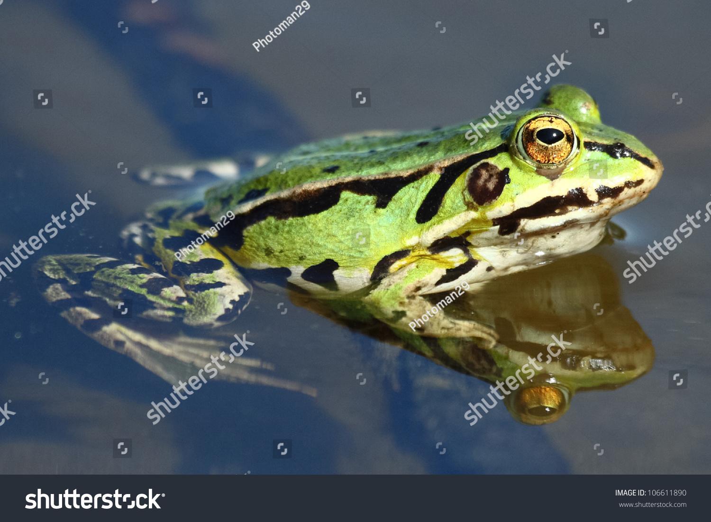 青蛙是保护动物