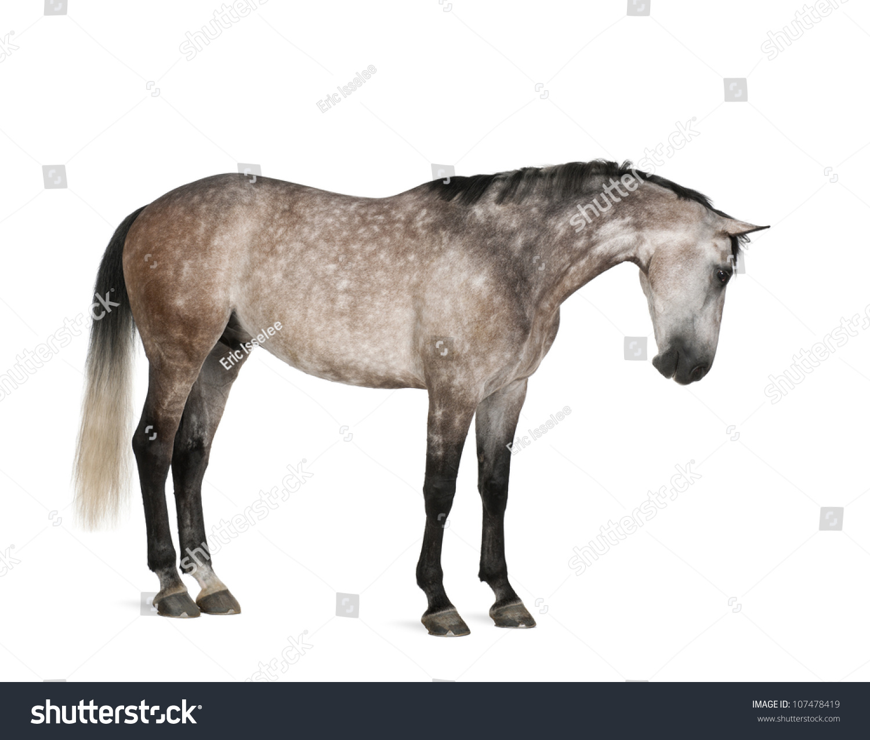 微信头像动物马