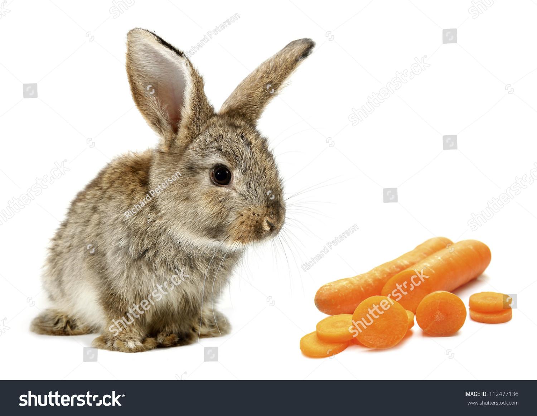 兔兔宝宝和橙色胡萝卜片-动物/野生生物-海洛创意()