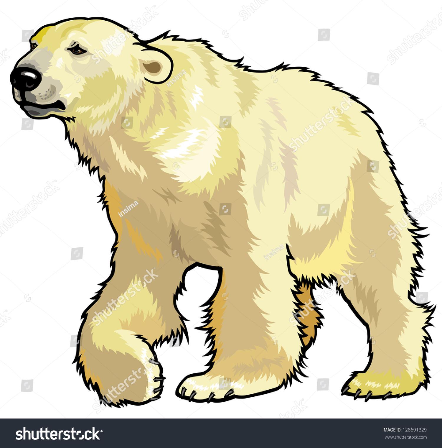 北极熊,北极熊,北极的野生动物
