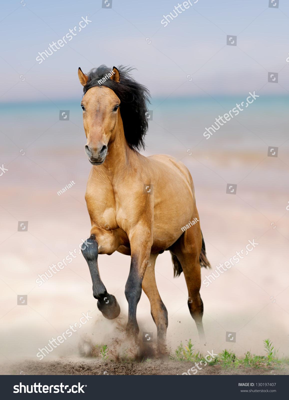 野马在海边奔跑-动物/野生生物