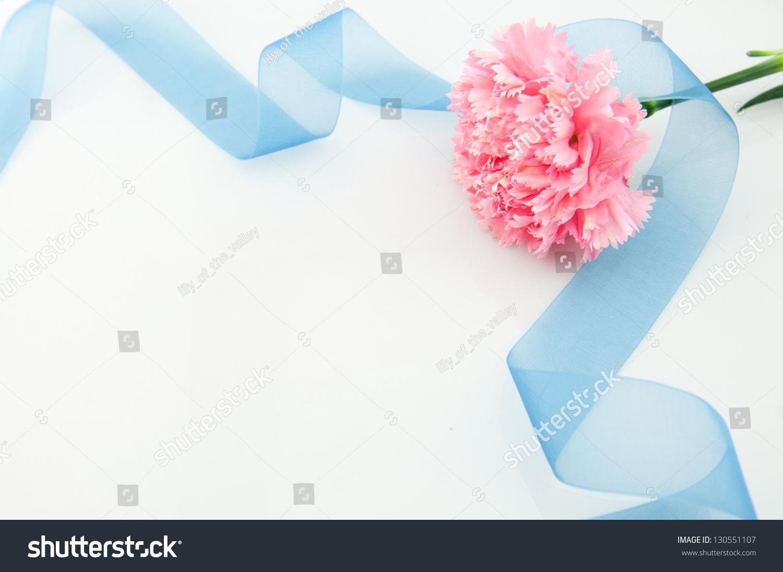 美丽的粉红色康乃馨蓝色丝带-自然-海洛创意(hellorf)