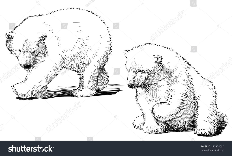 北极熊幼崽-动物/野生生物