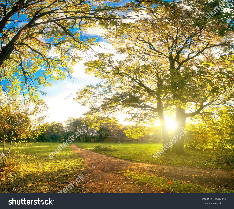 秋天的公园自然景观图片