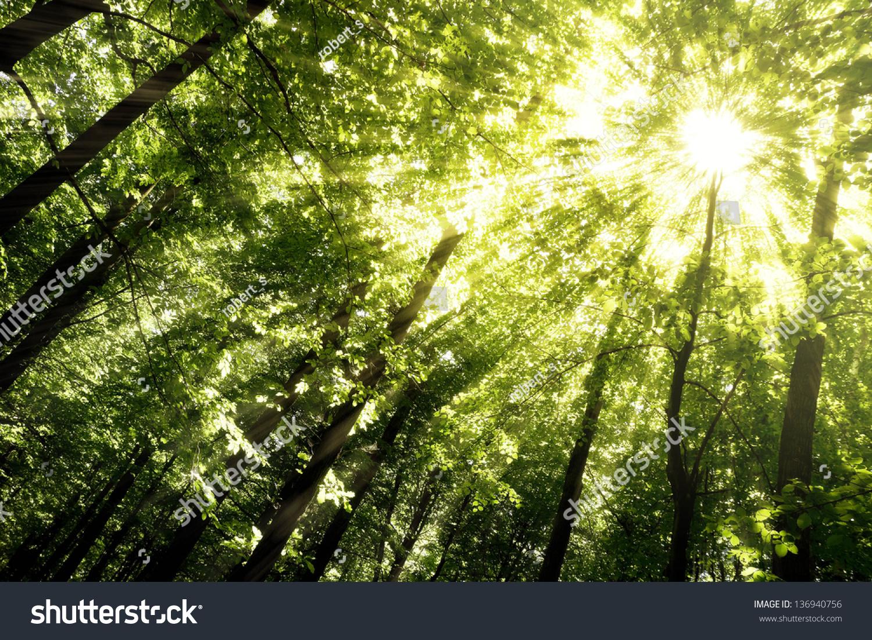 微信头像风景树