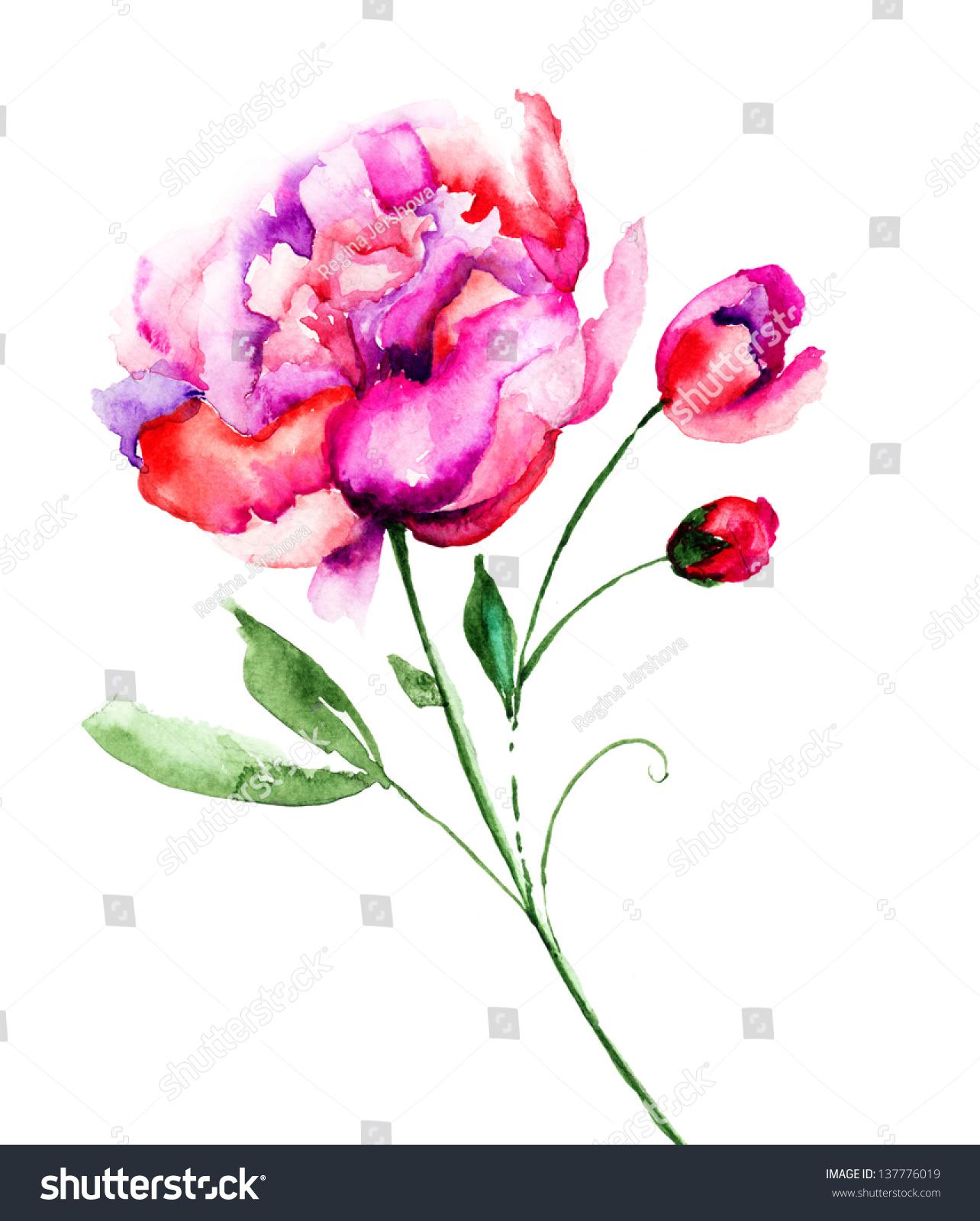 美丽的牡丹花,水彩画-艺术