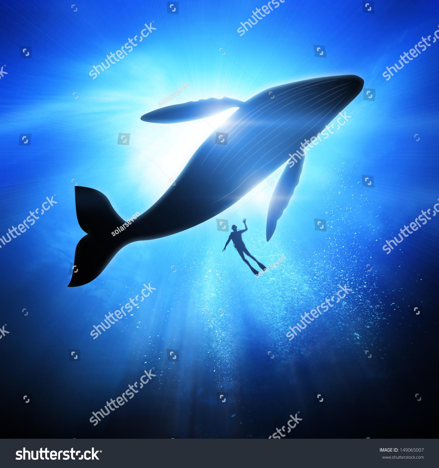 壁纸 动物 海洋动物 桌面 1500_1600