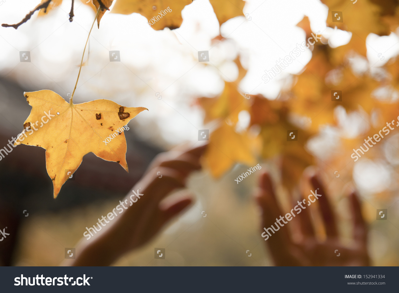 人类手在秋天到达一片树叶-人物-海洛创意(hellorf)-.