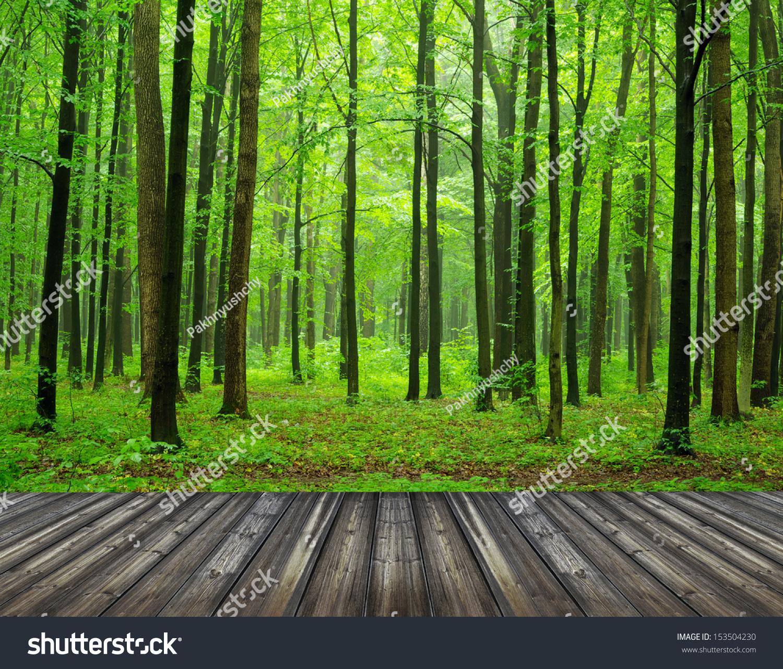 森林背景-自然,公园/户外-海洛创意(hellorf)-中国-.