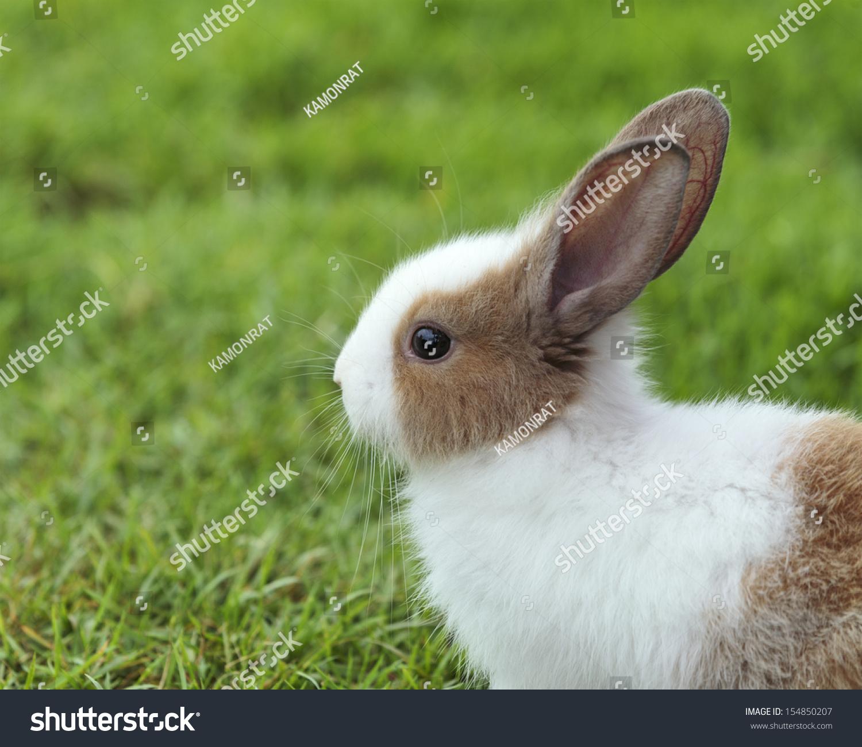 小白兔在草地上-动物/野生生物-海洛创意(hellorf)