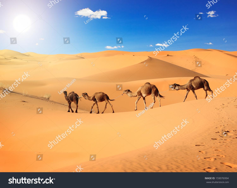沙漠微信头像风景