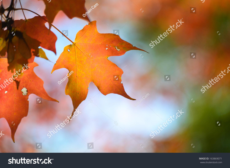 秋天的枫叶与天空背景-背景/素材,自然-海洛创意()-合