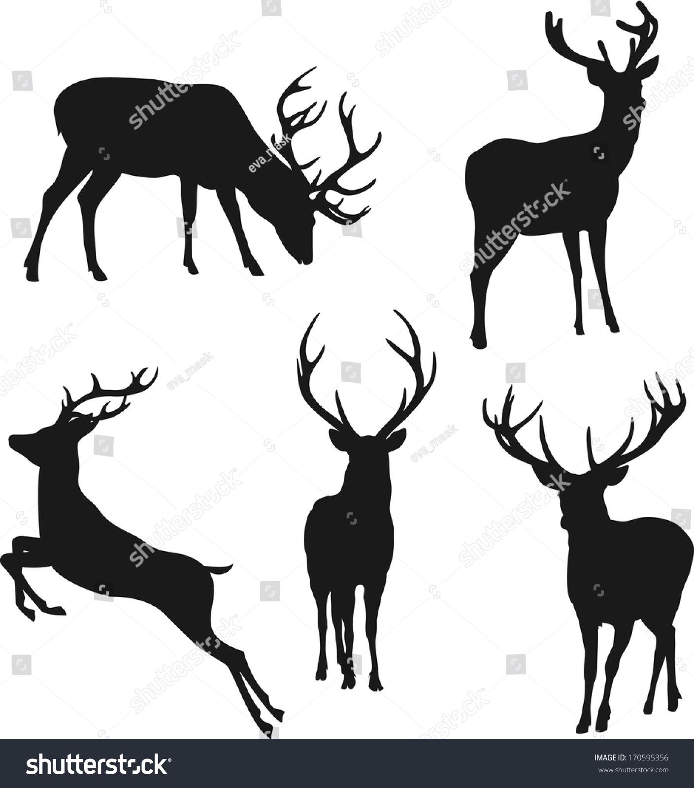 白色背景的剪影-动物/野生生物