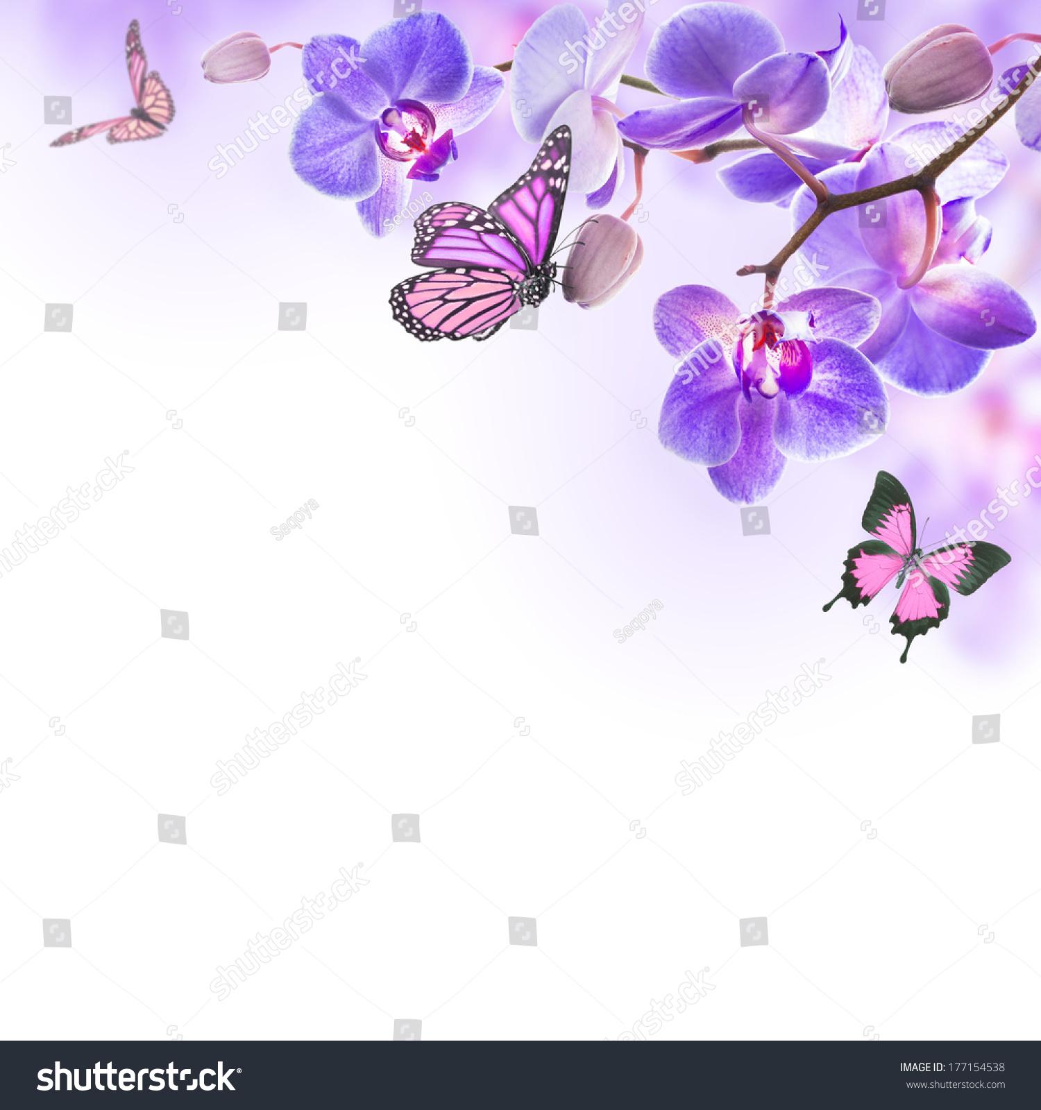 热带兰花和蝴蝶花的背景-背景/素材