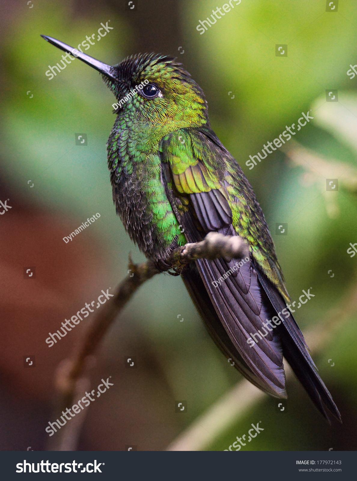 一枝美丽而奇特的绿色鸟-动物/野生生物,自然-海洛()