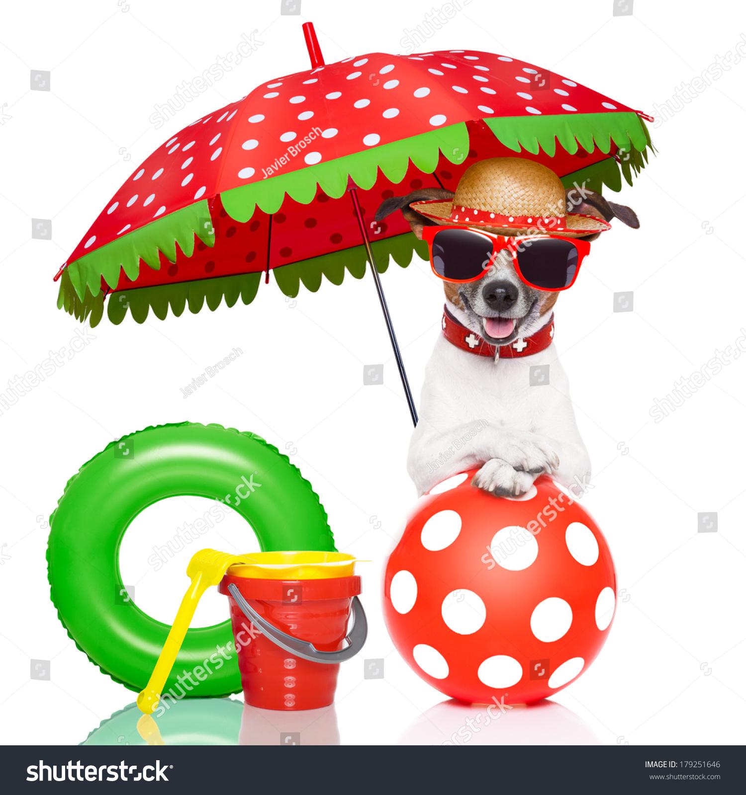 狗与红色太阳镜和雨伞下一个色彩鲜艳的帽子-动物