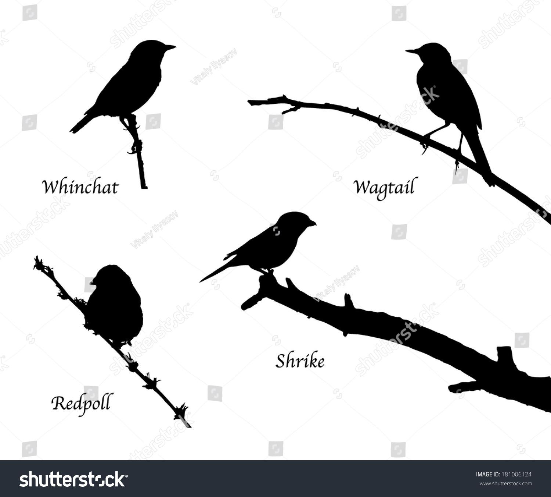 鸟儿在树枝上轮廓-动物/野生生物