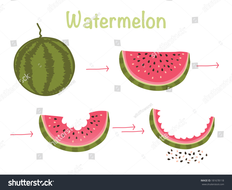西瓜.开胃的天然水果.向量孤立的食物