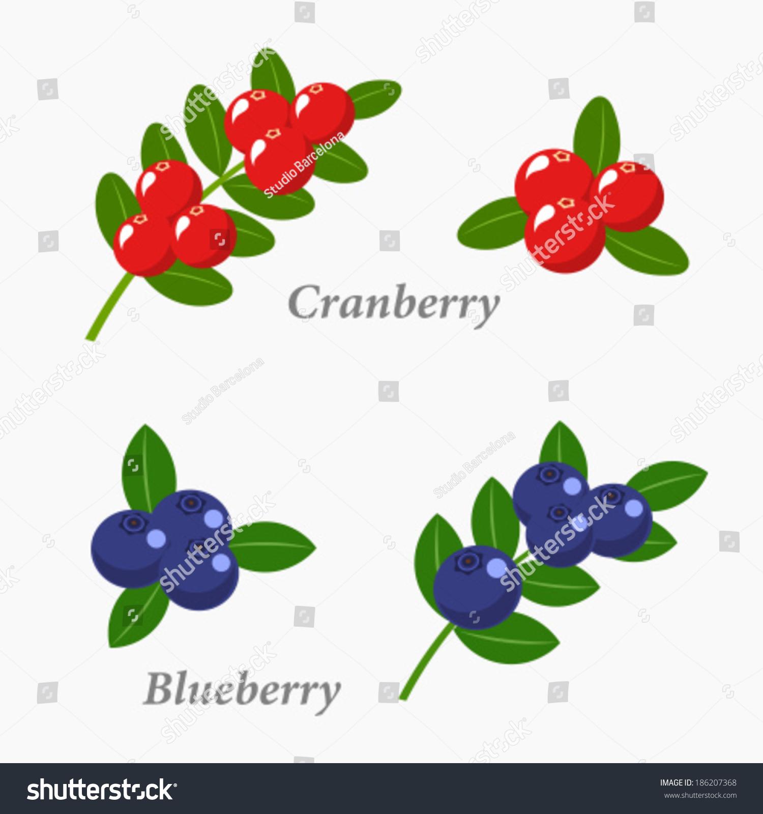 小红莓和蓝莓.浆果的水果矢量图-食品及饮料,自然-()