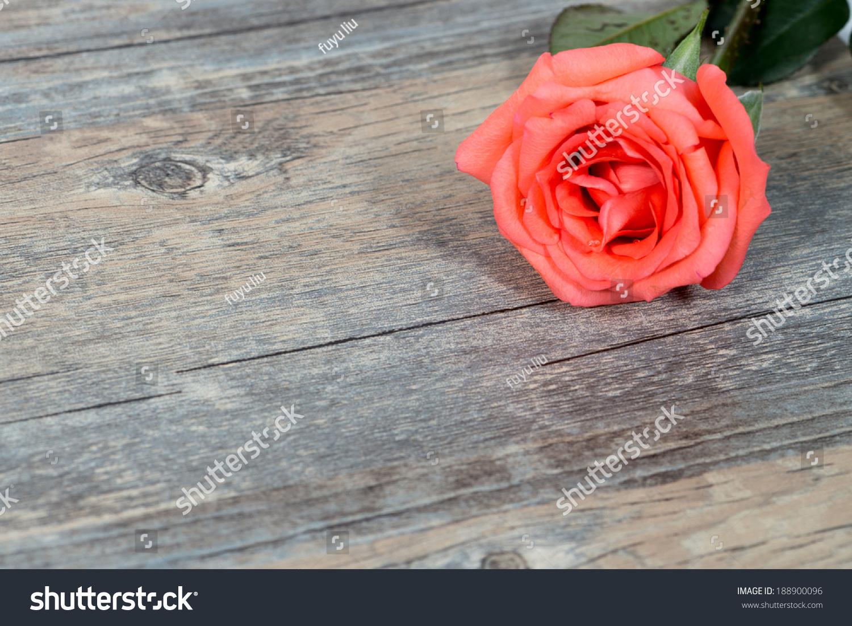 红玫瑰木的背景-背景/素材,物体-海洛创意(hellorf)-.