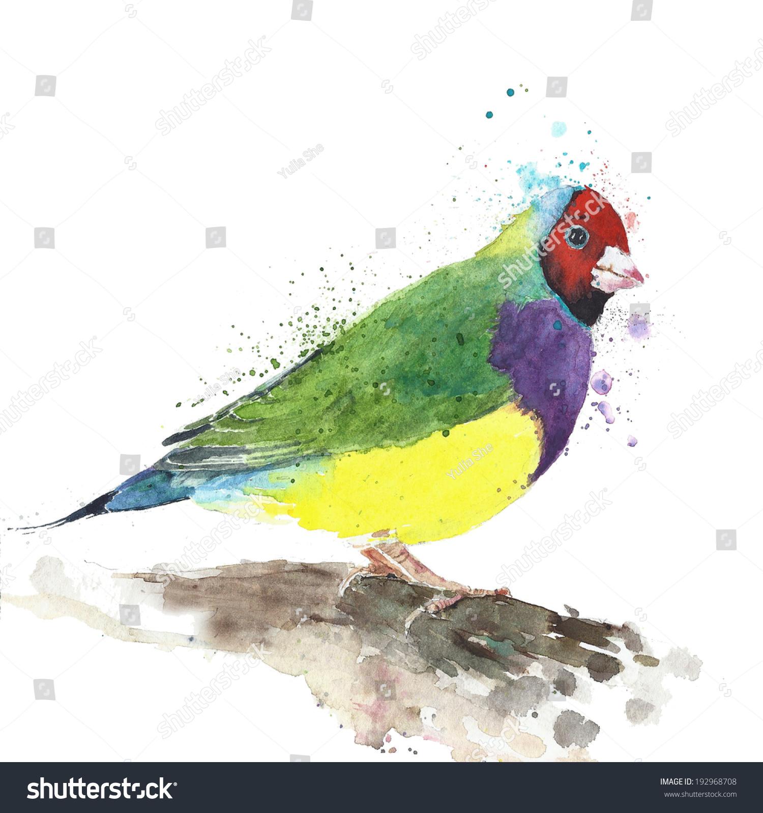 鸟锦雀水彩画孤立在白色背景-动物/野生生物