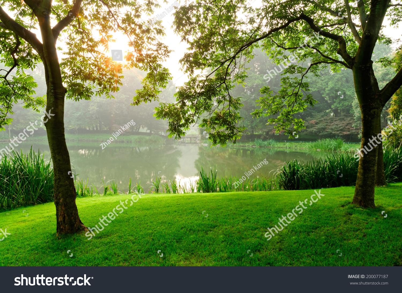 春天公园在早上,太阳升起在树后面-自然