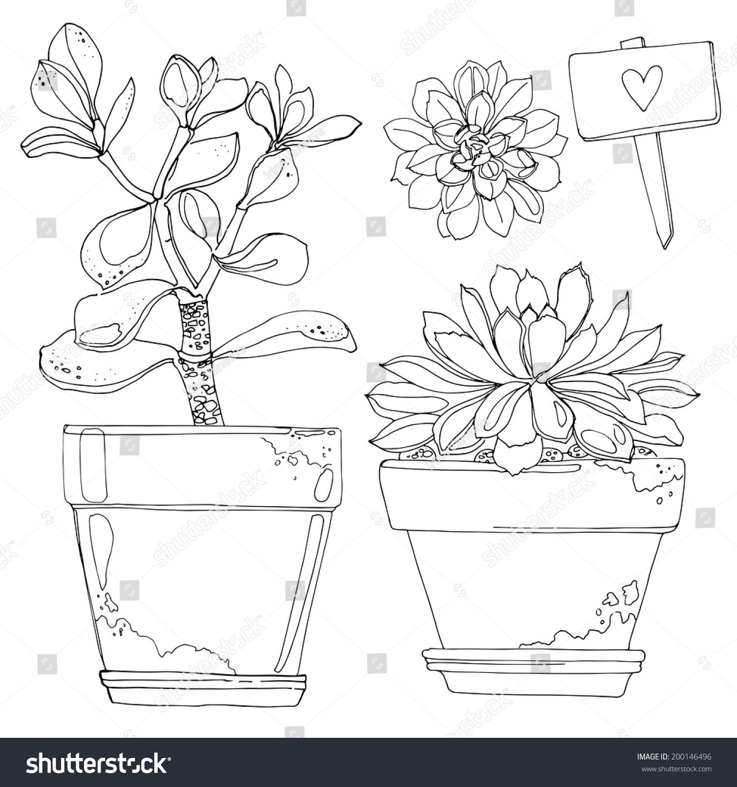 要求有两种元素植物动物的画