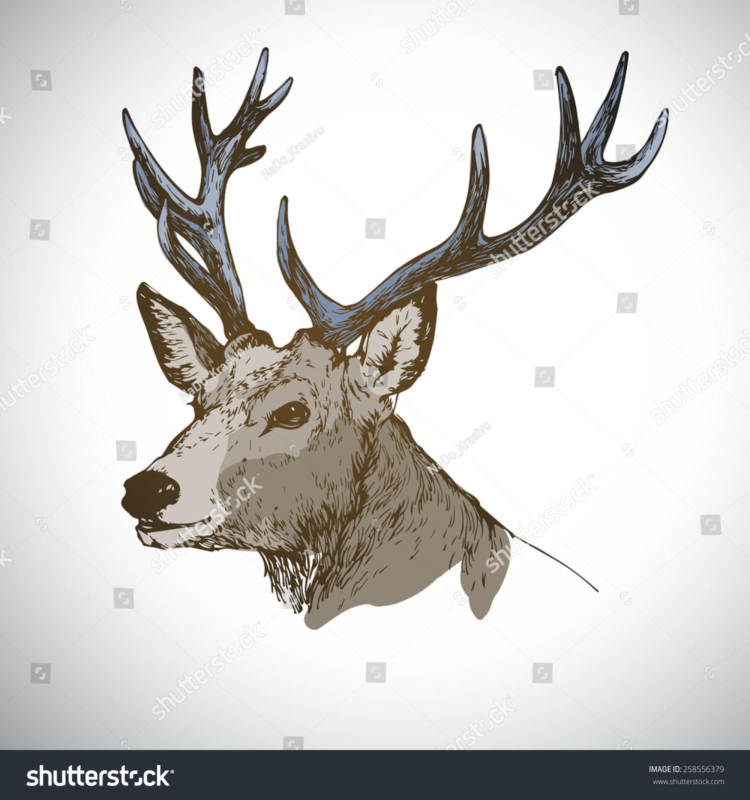 头鹿墨水素描色彩矢量插图-动物/野生生物,其它-海洛