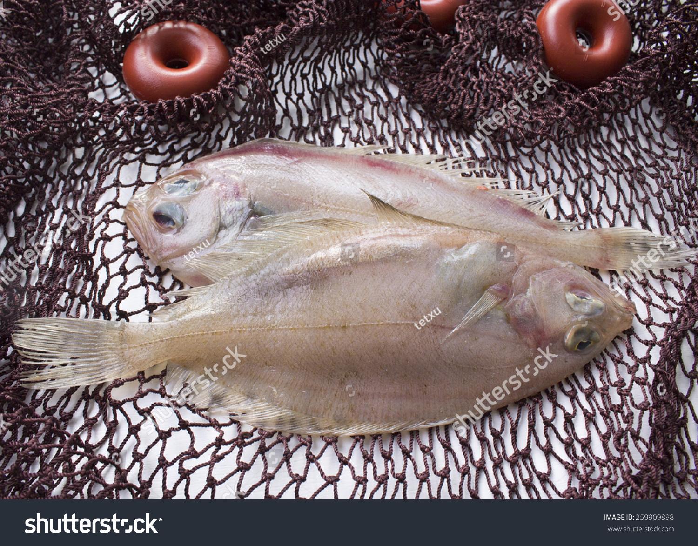 动物 鱼 鱼类 1500