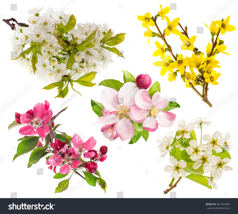 苹果和梨树的花朵,樱桃树枝-物体