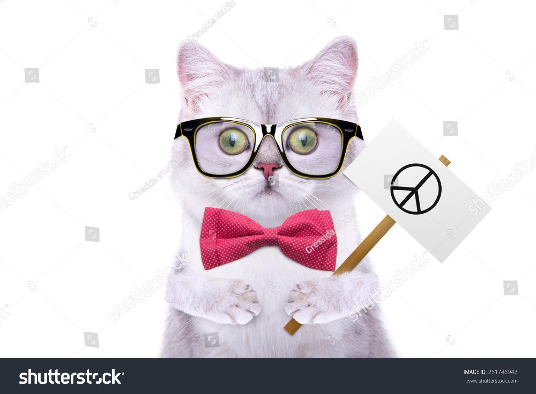 有趣的动物.时尚的猫