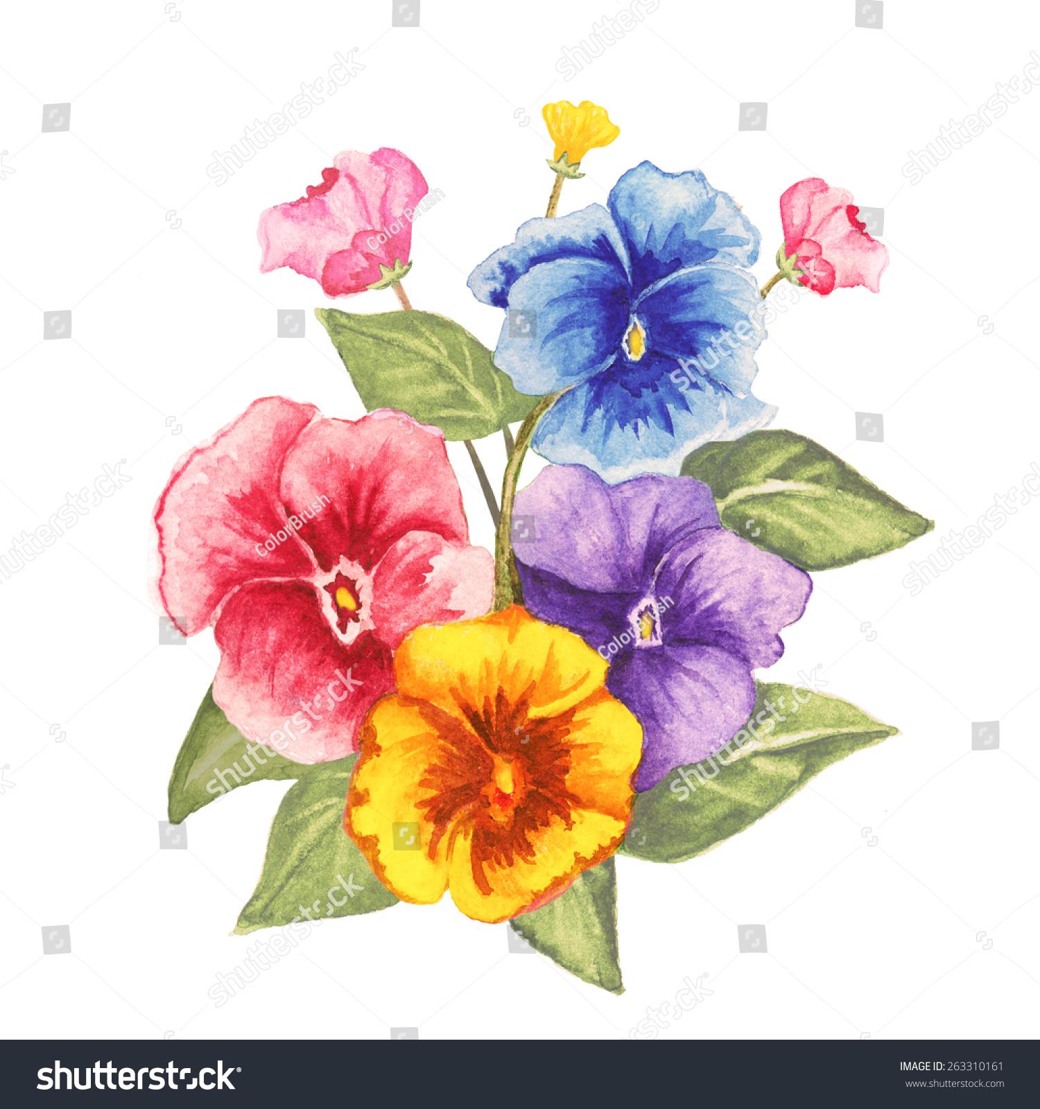 水彩三色紫罗兰花束,花蕾,绿叶特写孤立在白色背景.手