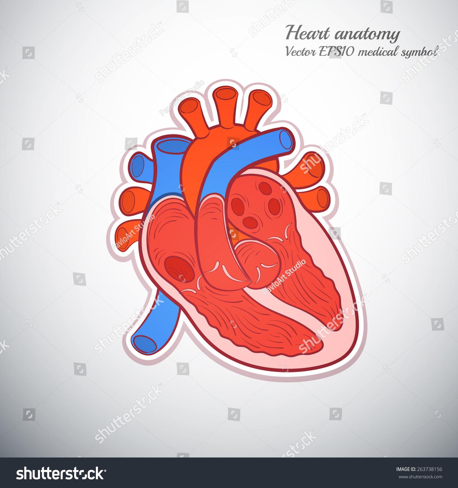 心脏医学解剖学轮廓颜色图标矢量图图片