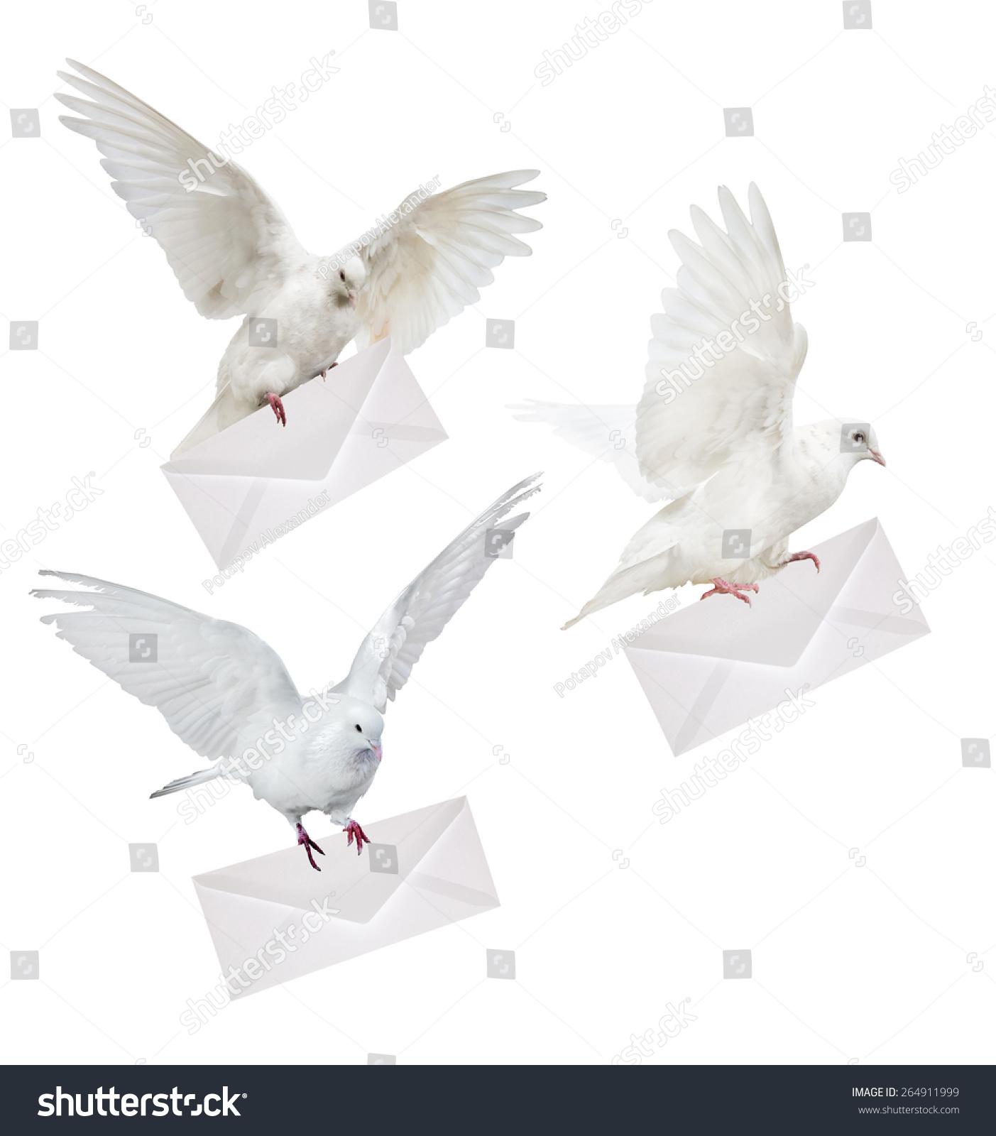 纸杯手工制作鸽子