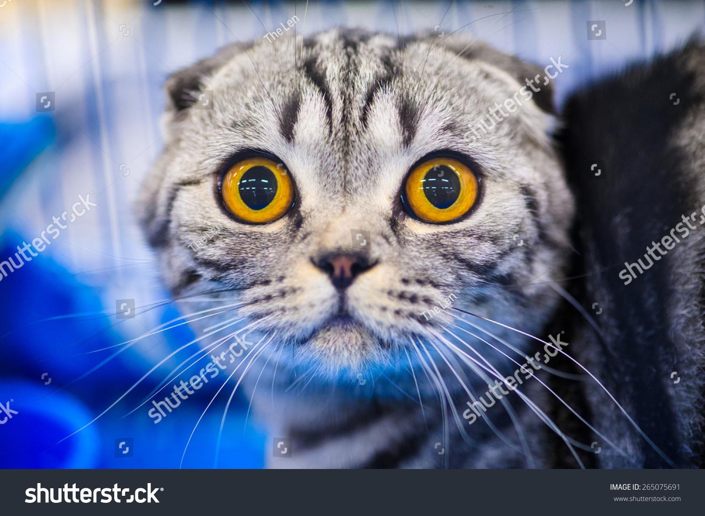 可爱的猫震惊-动物/野生生物,其它-海洛创意(hellorf)