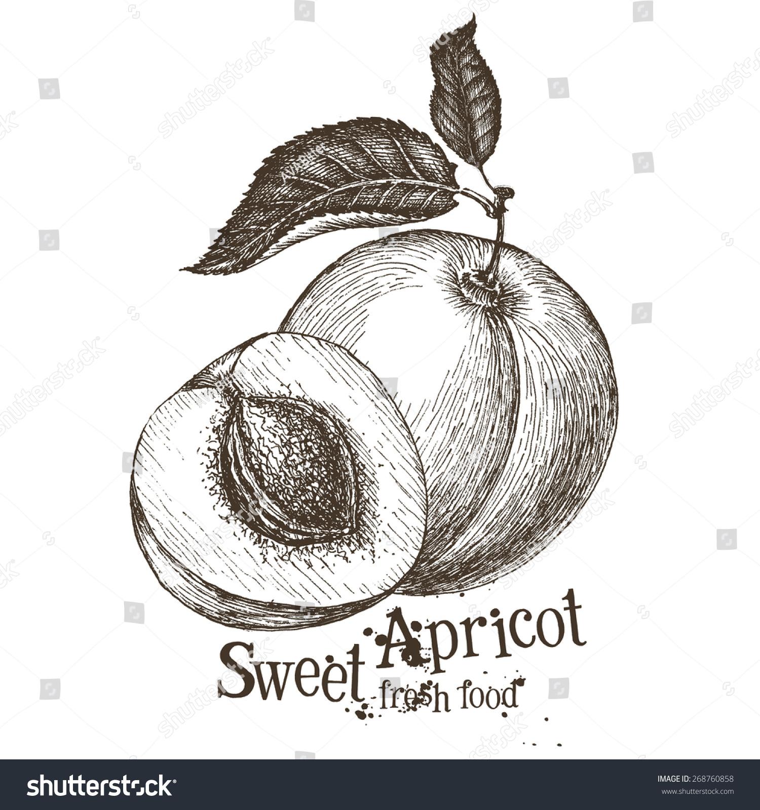 杏矢量标志设计模板.水果或食物图标.