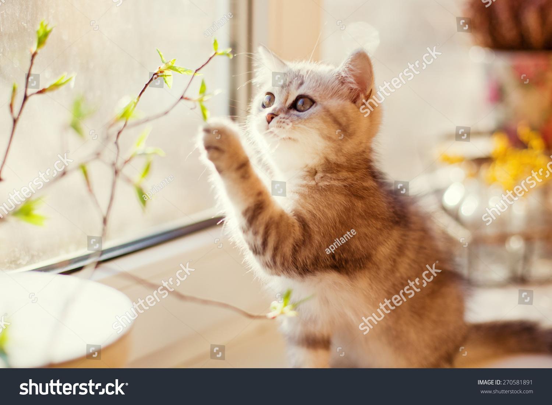 可爱的小猫咪玩绿叶-动物/野生生物
