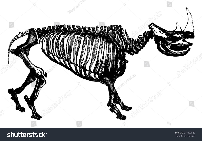所属分类:       动物