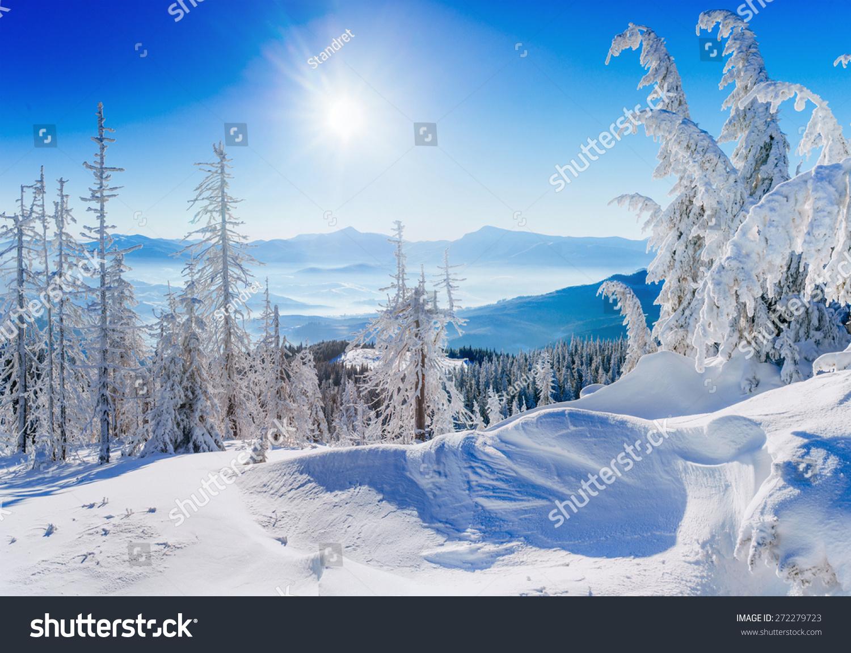 适合微信头像图片的冬天风景