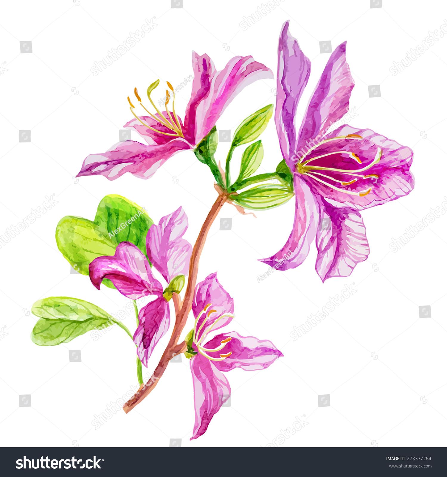 粉红色的花早午餐-艺术,自然-海洛创意(hellorf)-中国