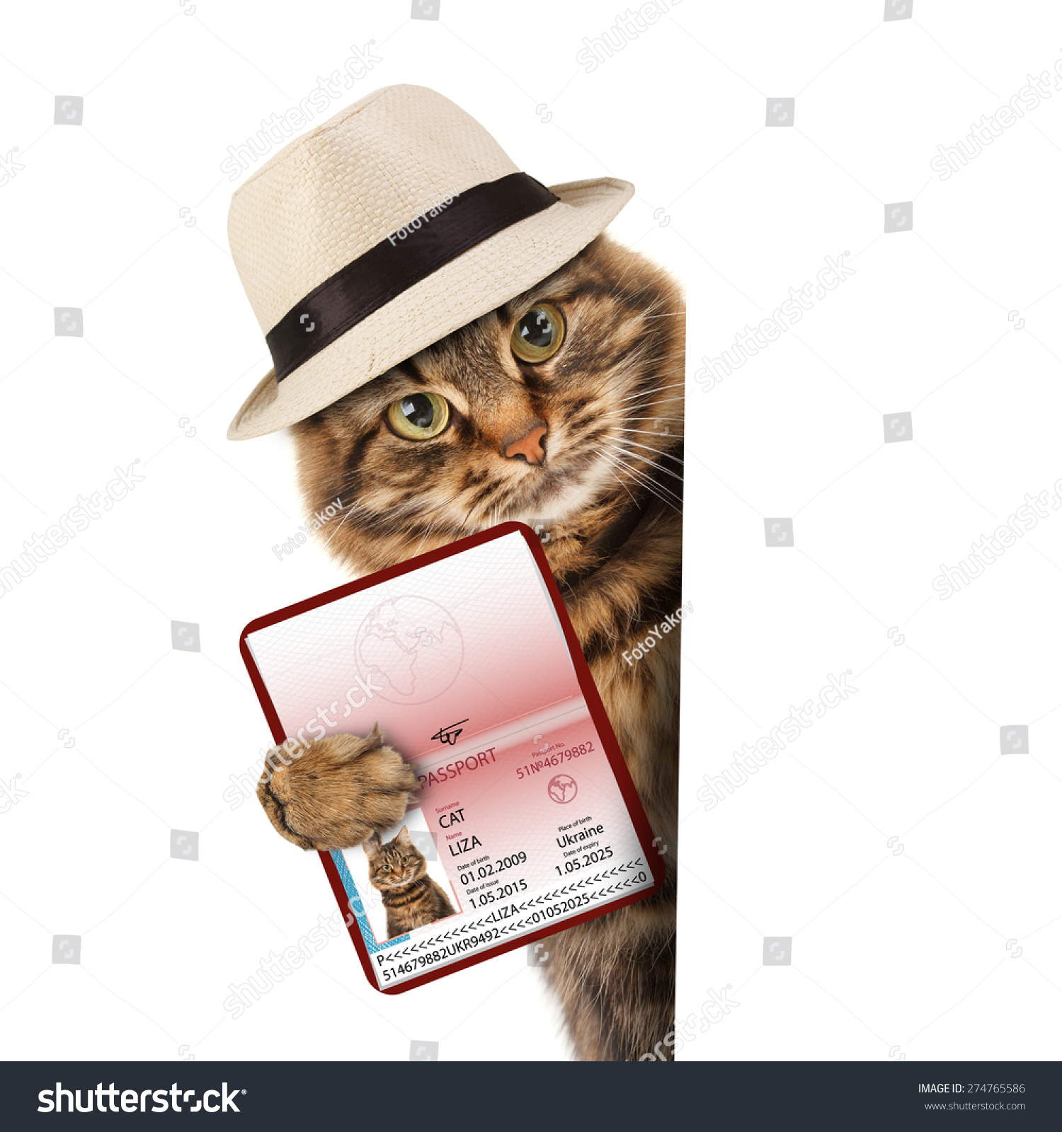 带护照的有趣的猫-动物/野生生物