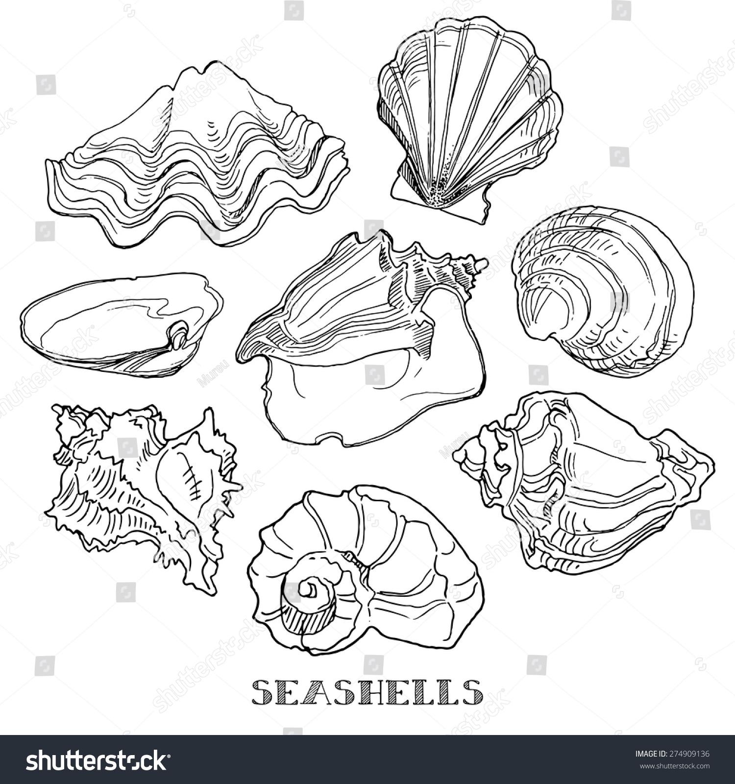 贝壳,手绘设计元素