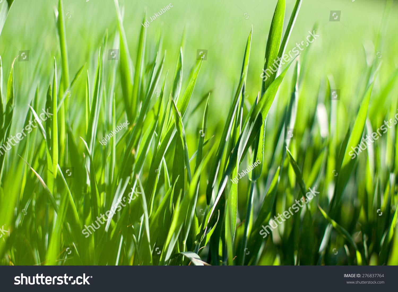 绿色的大麦-背景/素材,自然-海洛创意(hellorf)-中国