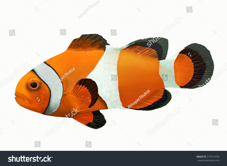 黄色的小丑鱼在白色背景-动物/野生生物