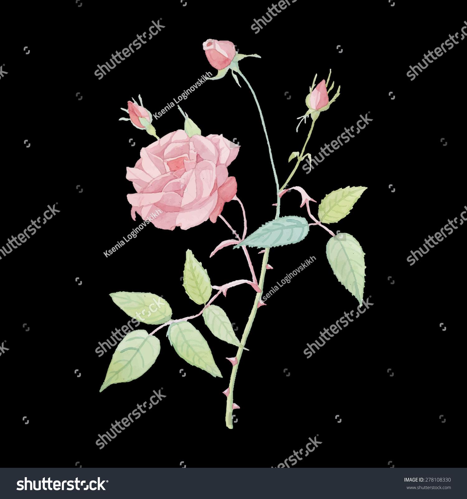 水彩画色彩鲜艳的玫瑰花朵图案