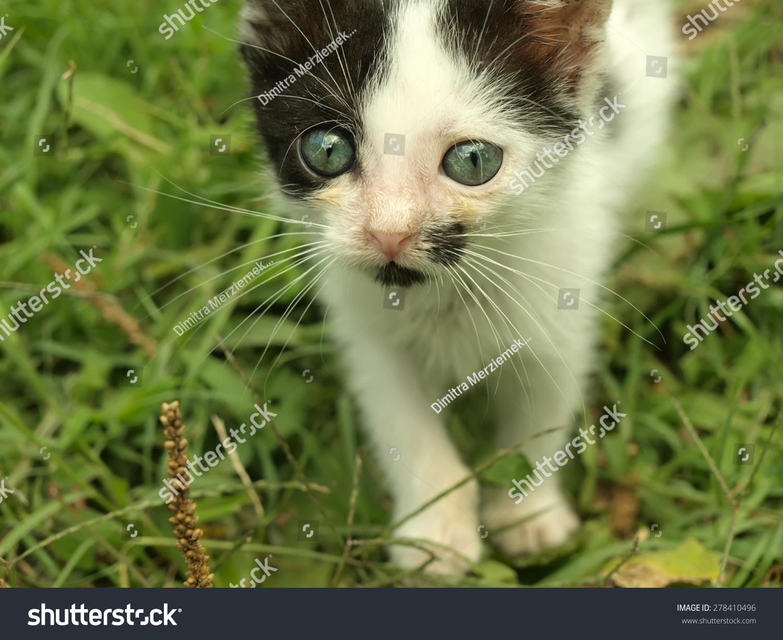 可爱的小猫在草地上美丽的眼睛-动物/野生生物-海洛