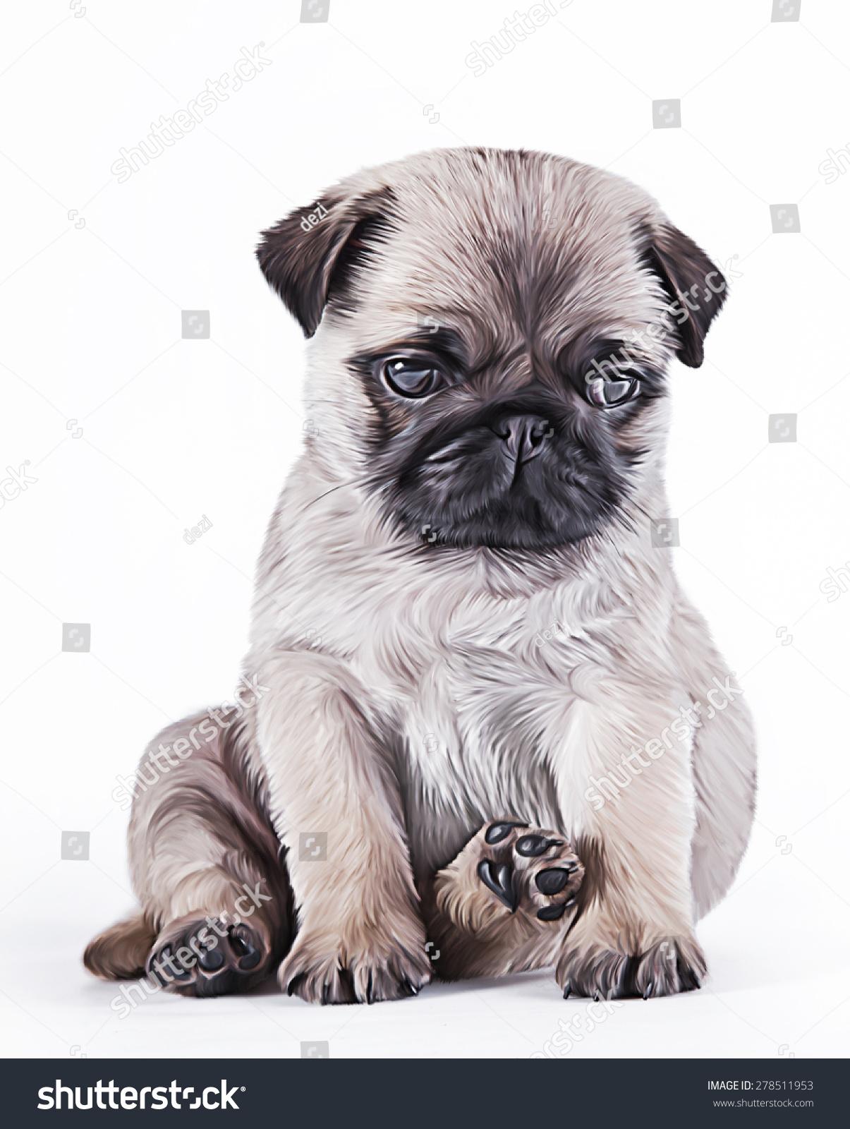 在白色背景上绘制的小狗哈巴狗画像-动物/野生生物